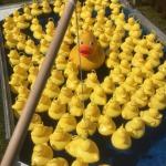 Kinder Enten angeln mieten / leihen